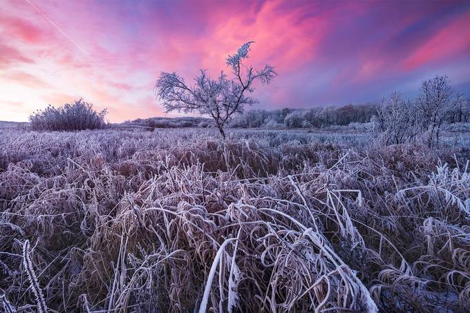 A deer photobombed this sunrise  by scottaspinall - Shades Of Purple Project