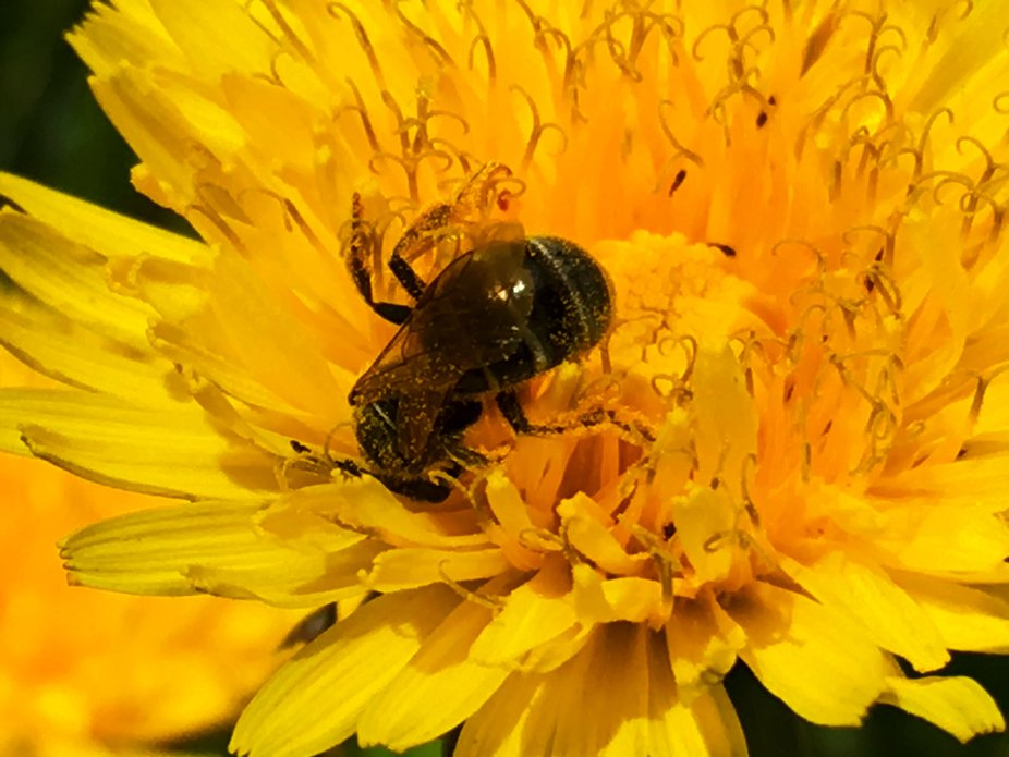 Macro shot of a working bee
