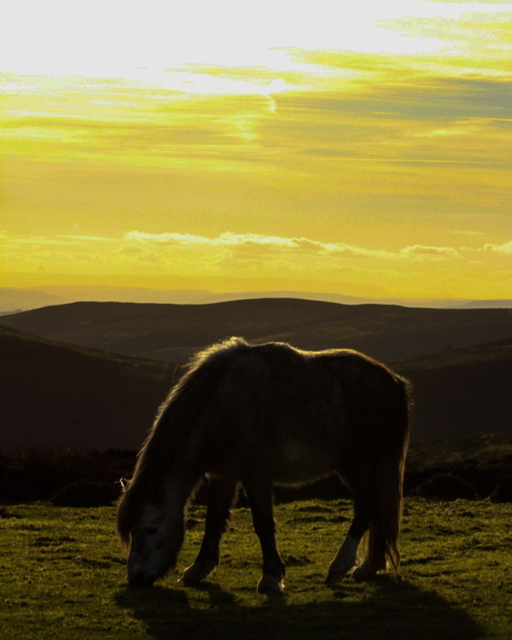 There are many wild ponies on the MYND