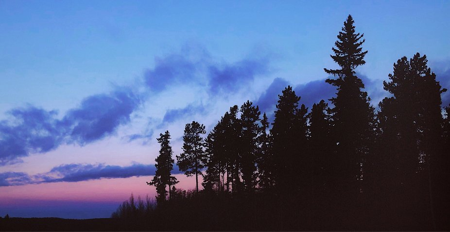 Sunrise colours fill the sky in the Rocky Mountains of Alberta making silhouettes of spruce trees