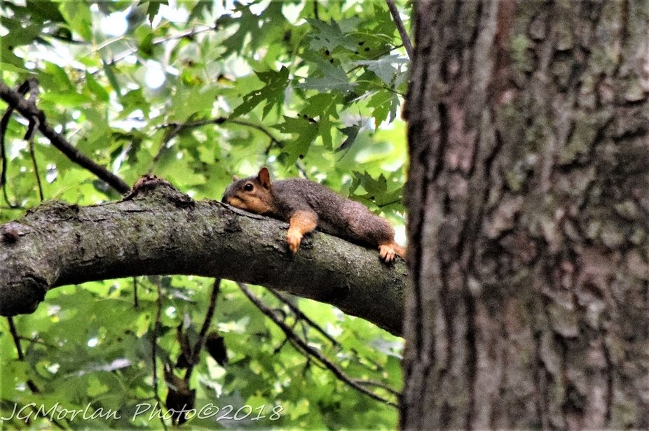 Poor little critter must be worn out as it appears too tired to move.