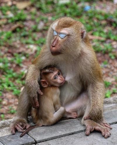 Thailand. Phuket . Monkey mountain