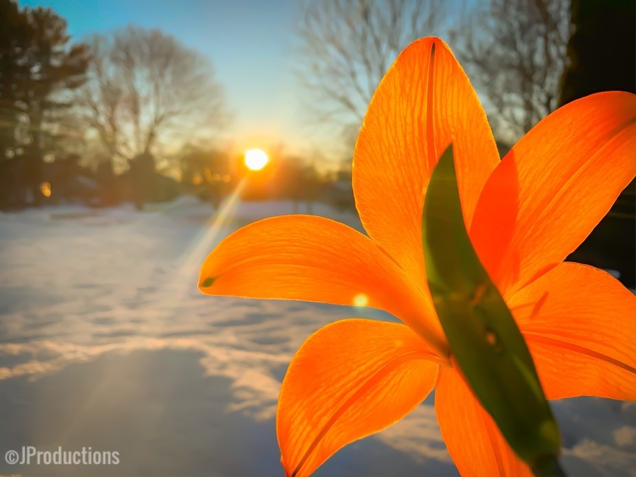 Flowers in winter ????