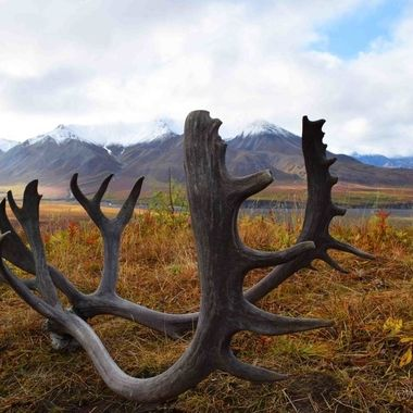 Antlers and bones