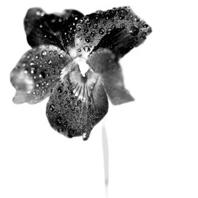 Creative flower in BW