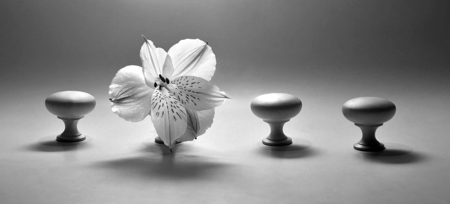 Playing around with lighting on a flower with some white-painted cabinet knobs.
