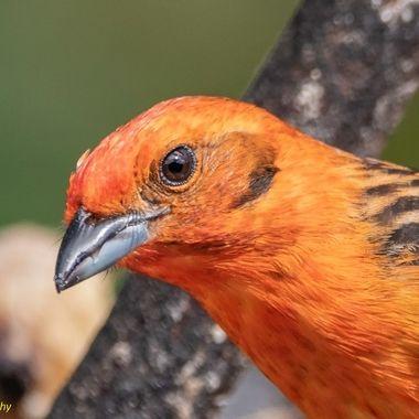 Close-up birds