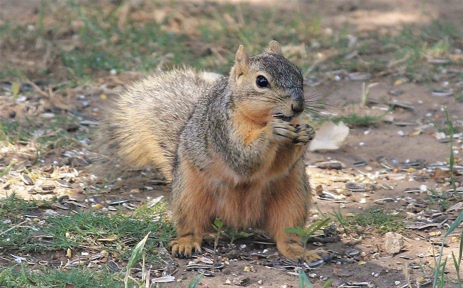 lil squirrel