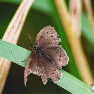 butterfly - 3863
