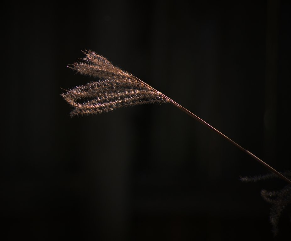 Dying Ornamental Grass in our backyard