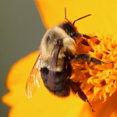 Honey bee IV