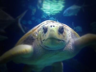 My Turtle Friend