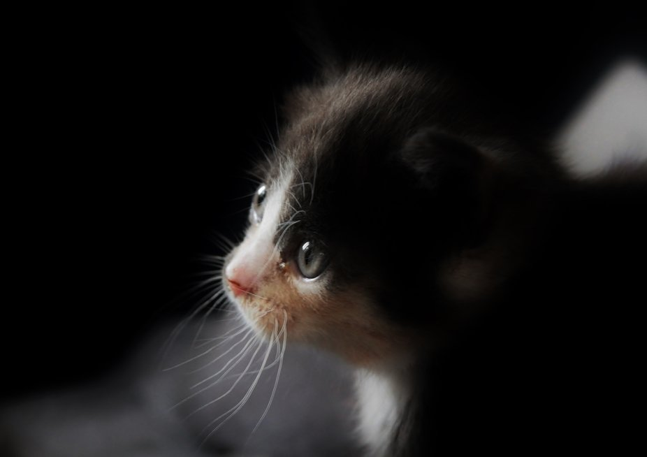 A Very Young Kitten