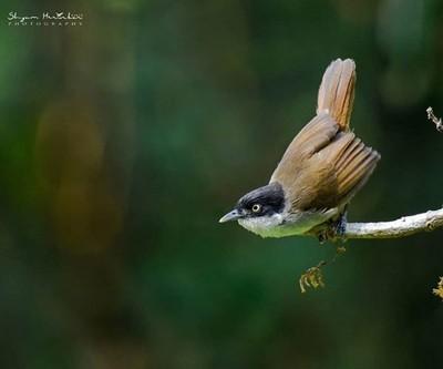 Dark Fronted Babbler #birdsofindia #birds #bestbirdshots #eye_spy_birds #indianwildlifeofficial #wildlifephotography #wildlife #nikonindiaofficial #nikon #natgeoyourshot #natgeo #planetbirds #pocket_birds #eow #edgeofwild