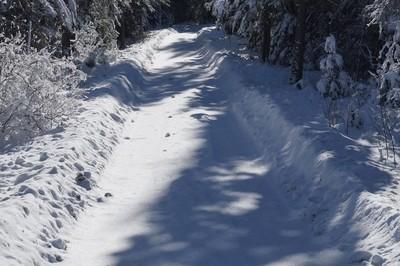 snowy lane through the woods.