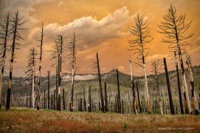 Forest Fire 6 Years Later
