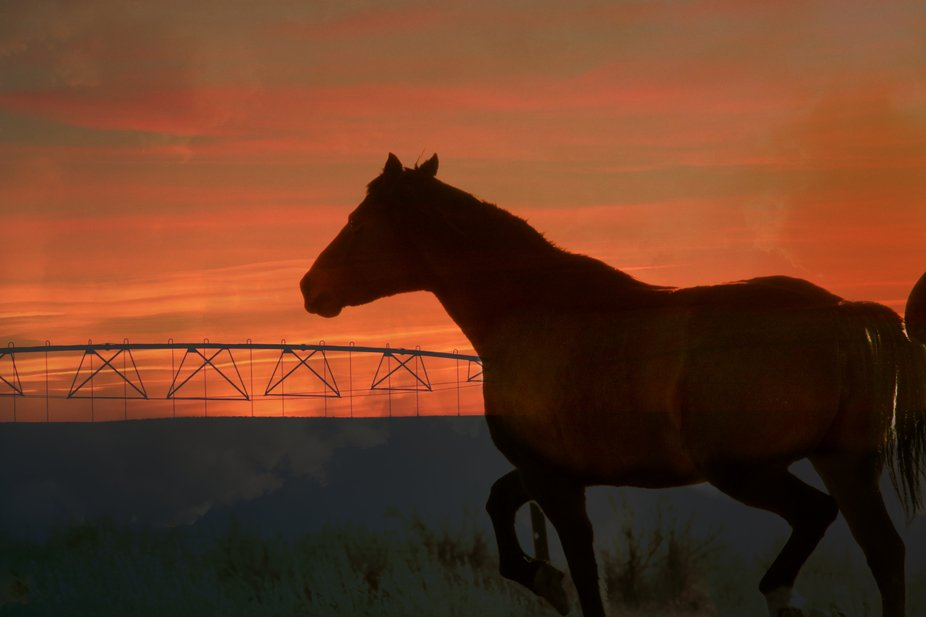 actually one of our horses on a large expanse of land