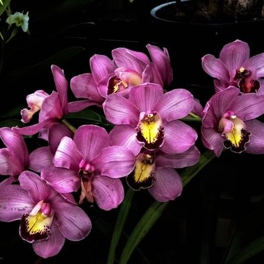 When speech comes from a quiet heart, it has the strength of the orchid, and the fragrance of rock. Stephen Mitchell