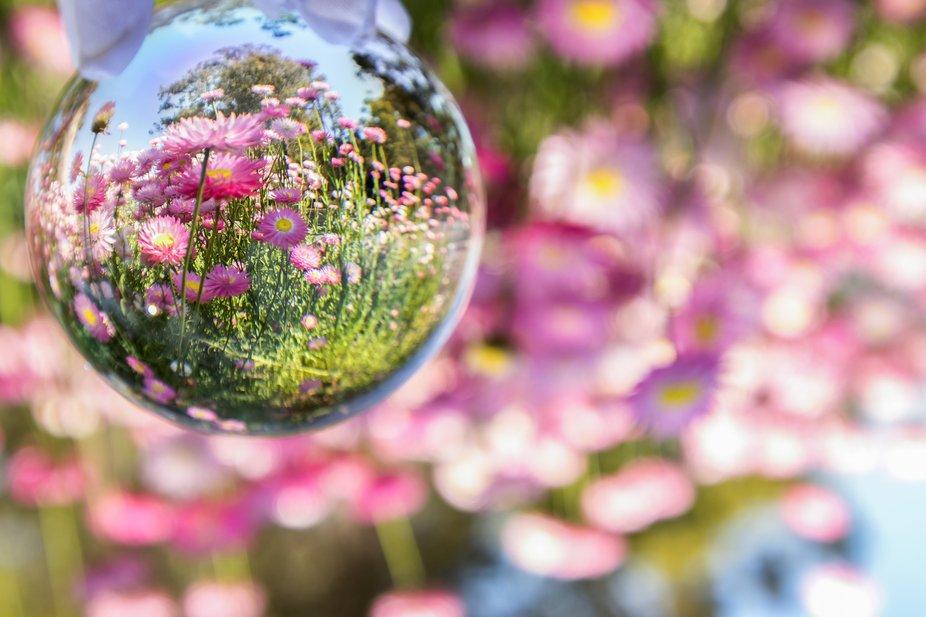 Springtime macro lensball