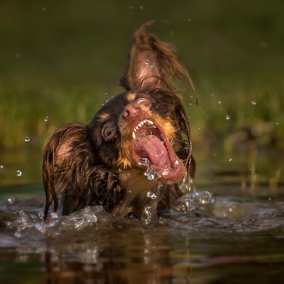 Monster by photo101_swe - Dogs In Action Photo Contest
