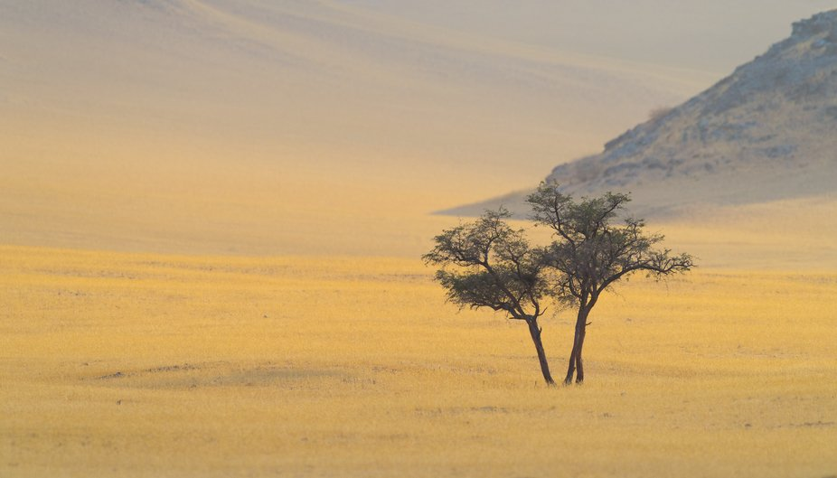 Damaraland, Namibia  This particular area was absolutely stunning in the soft light of early morn...