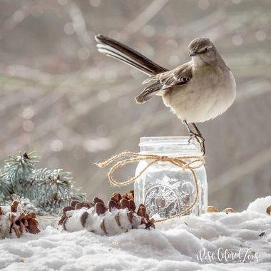 Mockingbird in the Snow