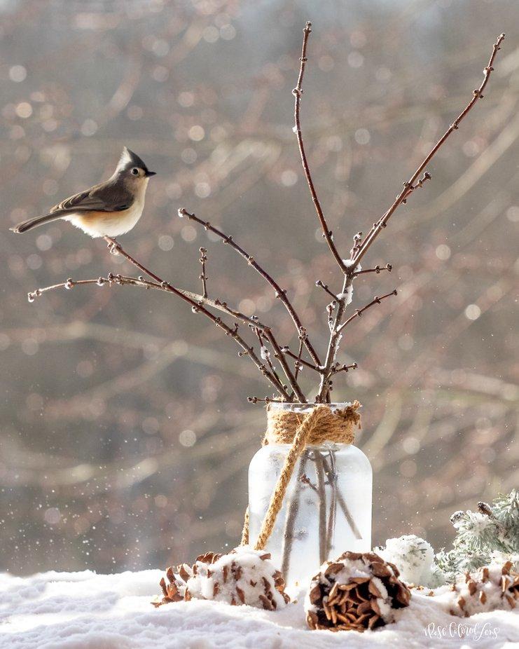 Still Life with Bird