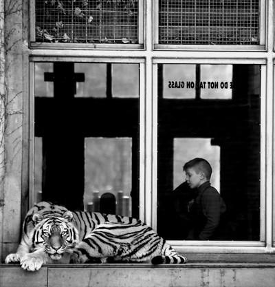 Tiger's Window