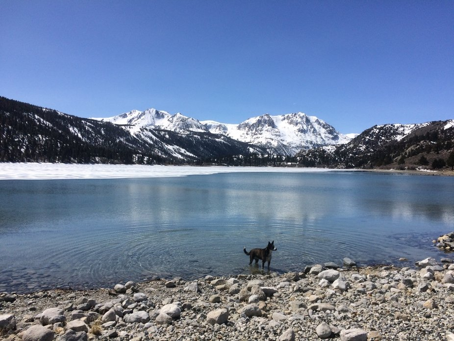 After a day of riding at June Mountain, June Lake is a mandatory stop for Sierra Dog. The lake is...