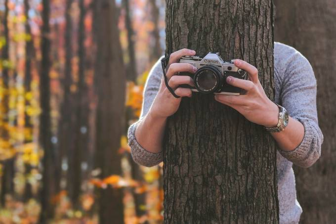 The Camera Tree by Ehoverman - Picturing Hands Photo Contest