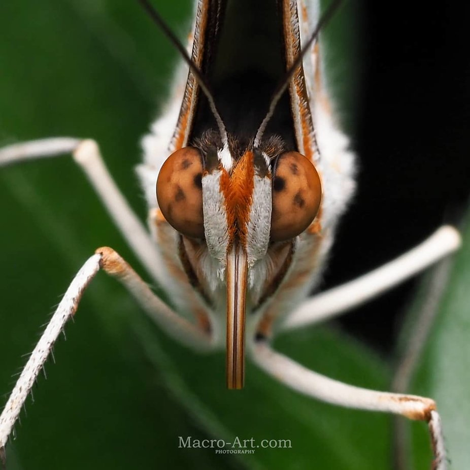 Trying to stare each other out! :)  by Macro_art - Colorful Macro Photo Contest