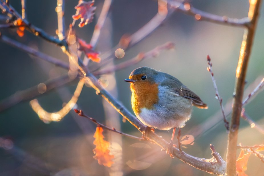 Sometimes you're photographing melting frost with a macro lens and a robin flies into fr...
