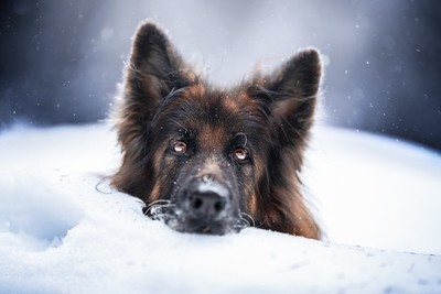 Trudi in Winter Wonderland