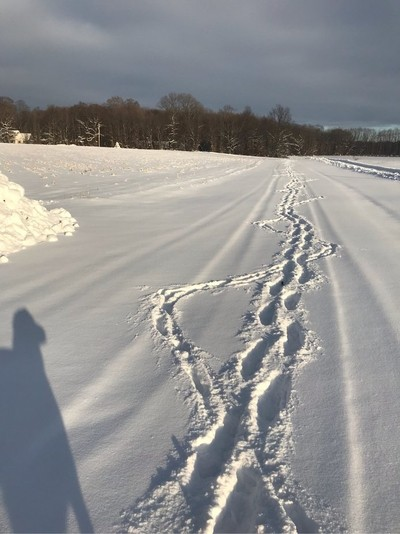 Walked the dog to end of driveway so the plow company can see where to plow. She definitely marches to the tune of her own drum!