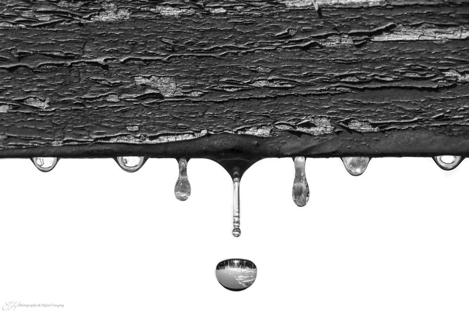 Life in a raindrop