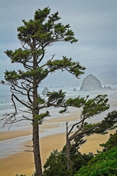 A view of Haystack Rock on Cannon Beach, Oregon