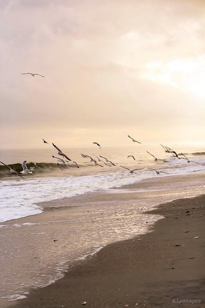 Sea Birds By the Sea Shore