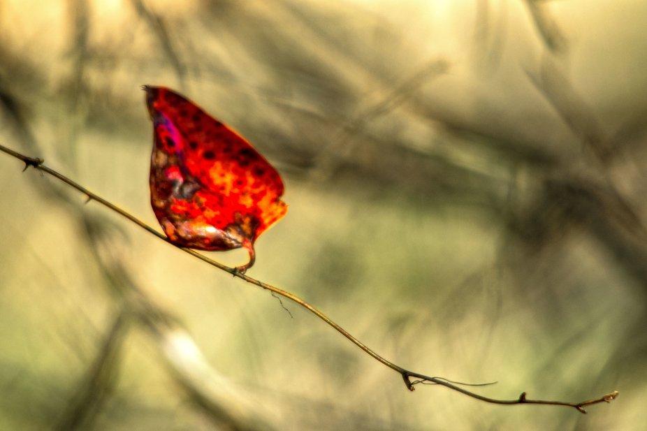 A Solitary Leaf