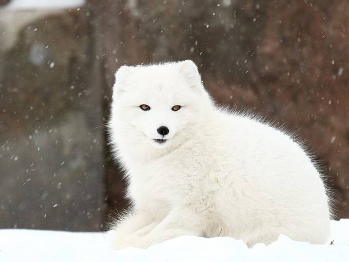 by scottcharlesprater - Winter Wildlife Photo Contest