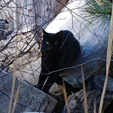 Stray cat that plays in my wood pile. Wish I could catch before the cold comes.