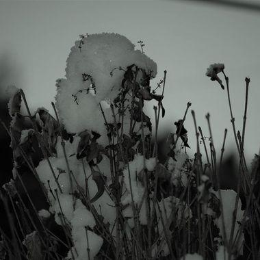 DSC_0167 (2)