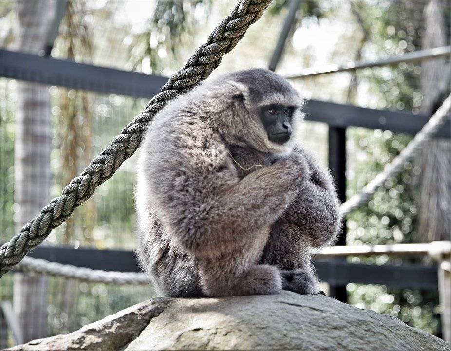 A Day At Mogo Zoo (1) - Deep In Thought
