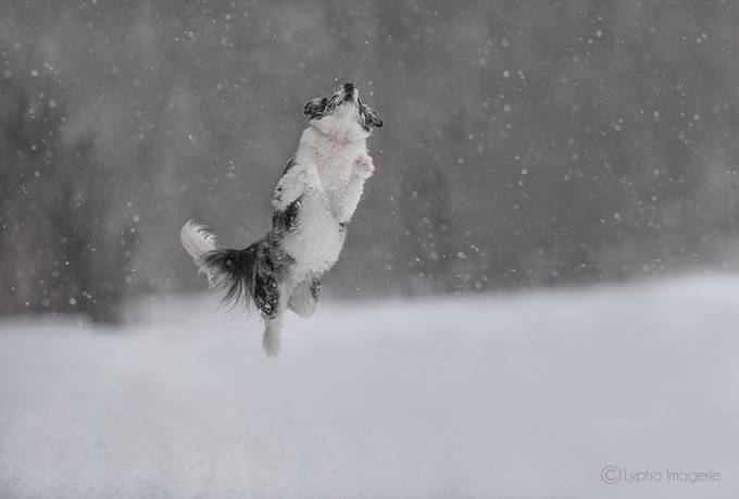 Ted reach the sky by lynefournier - Dogs In Action Photo Contest
