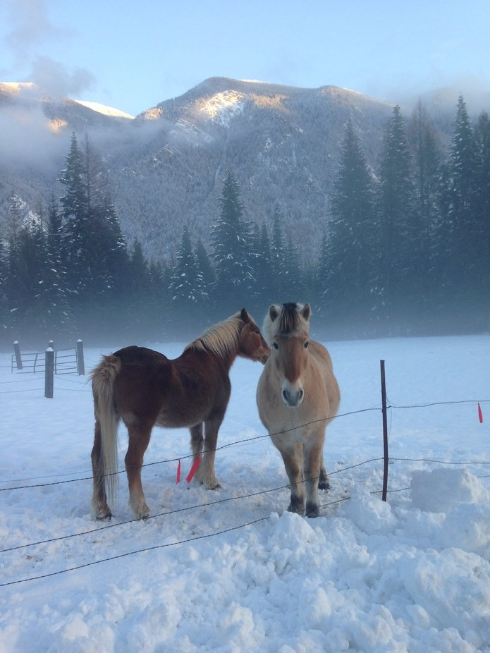 Horses love the new snow