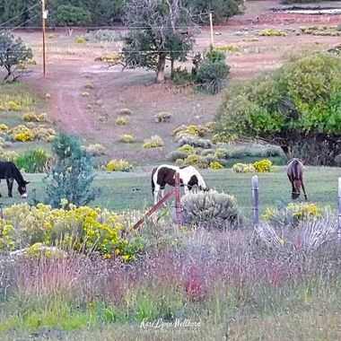 Wildflowers and horses