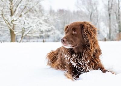 Mokka snow
