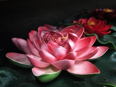 ~water lilies~