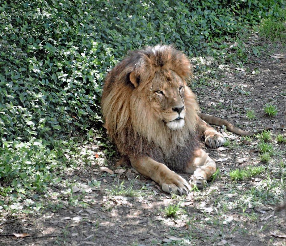 A Day At Mogo Zoo (2)