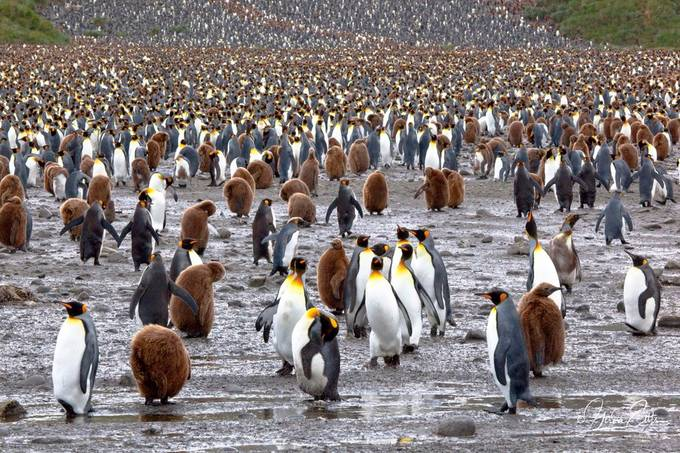 A busy day at the beach by gerdaeilts - Winter Wildlife Photo Contest