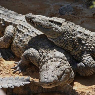 taking it easy......... Croc style